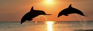 cropped-Dolphins-in-the-Sunset-1920x1200-wide-wallpapers.net_.jpg